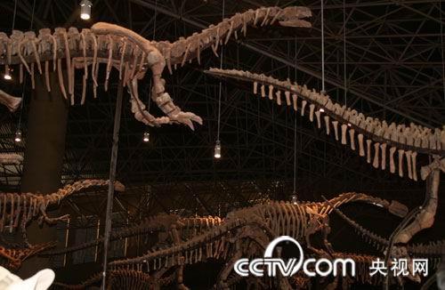 厅里展示的众多恐龙化石,都是近年在禄丰发现的,非常震撼-北有咸